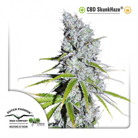 buy cannabis seeds CBD Skunk Haze