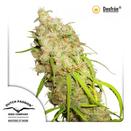 buy cannabis seeds Desfran