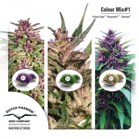 buy cannabis seeds Colour Mix #1