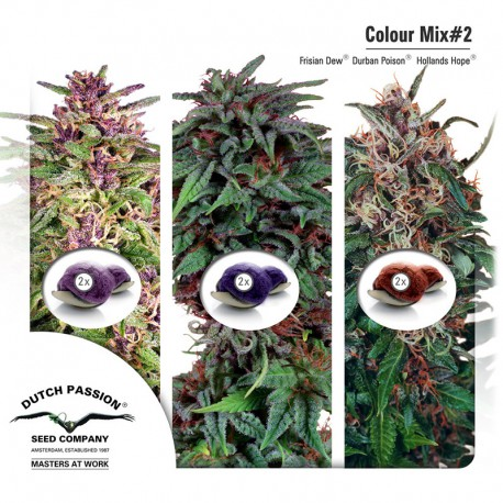 buy cannabis seeds Colour Mix #2