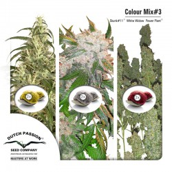 Colour Mix #3