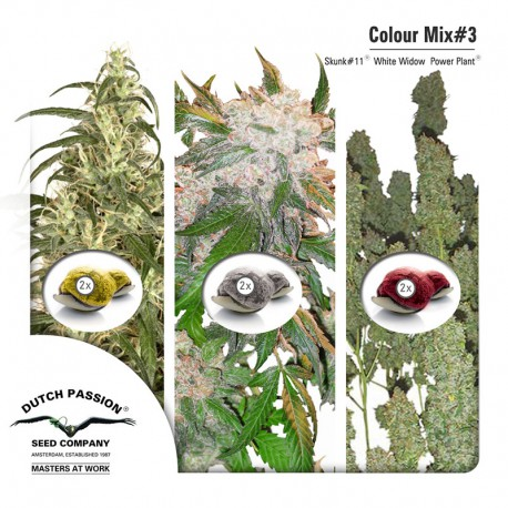 buy cannabis seeds Colour Mix #3