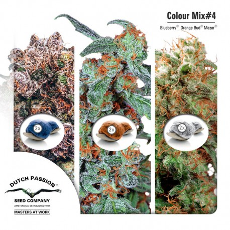 buy cannabis seeds Colour Mix #4