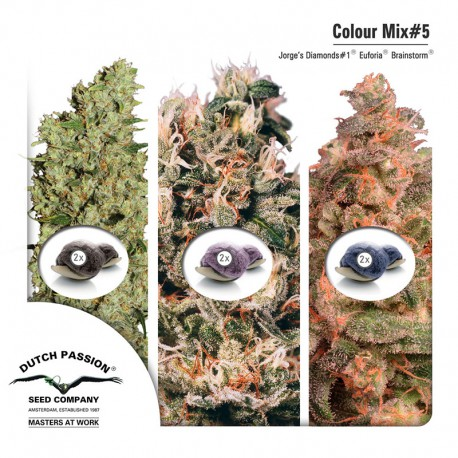 buy cannabis seeds Colour Mix #5