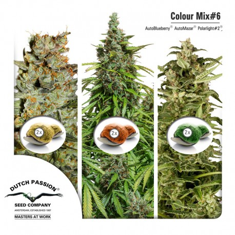 buy cannabis seeds Colour Mix #6
