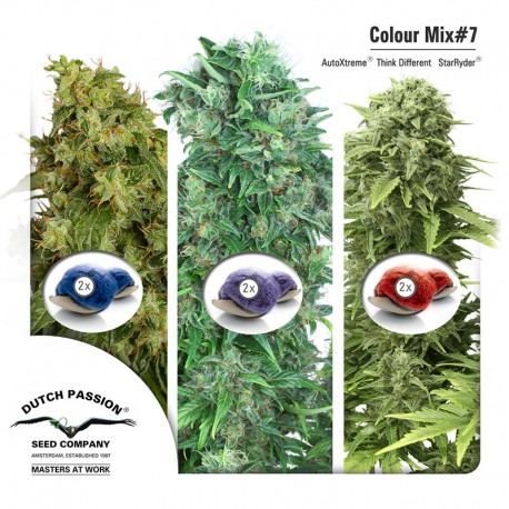 buy cannabis seeds Colour Mix #7