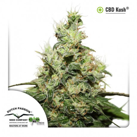 buy cannabis seeds CBD Kush