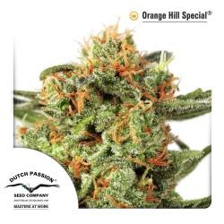 Orange Hill Special