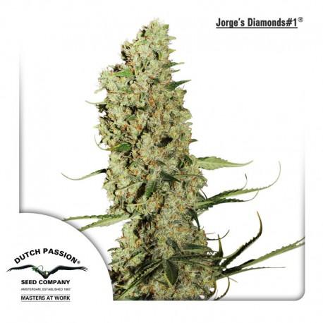 buy cannabis seeds Jorges Diamonds #1