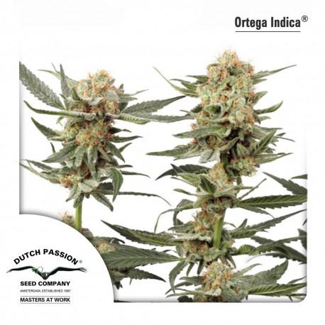 buy cannabis seeds Ortega Indica
