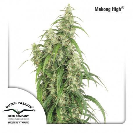 buy cannabis seeds Mekong High
