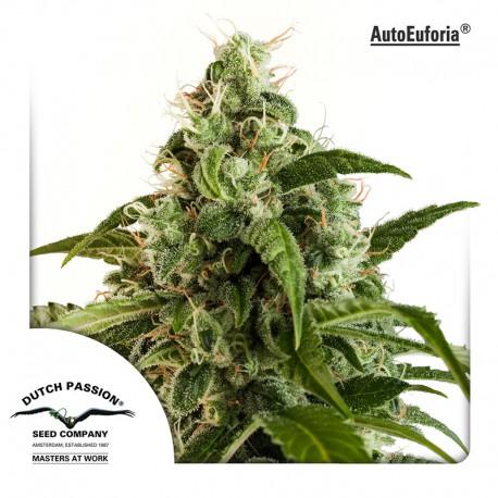 buy cannabis seeds AutoEuforia