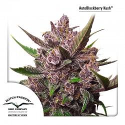 AutoBlackberry Kush