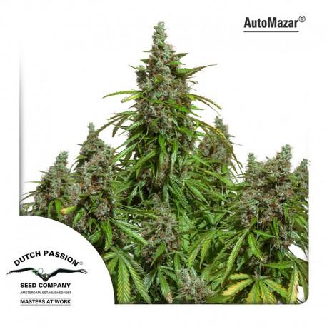 buy cannabis seeds AutoMazar
