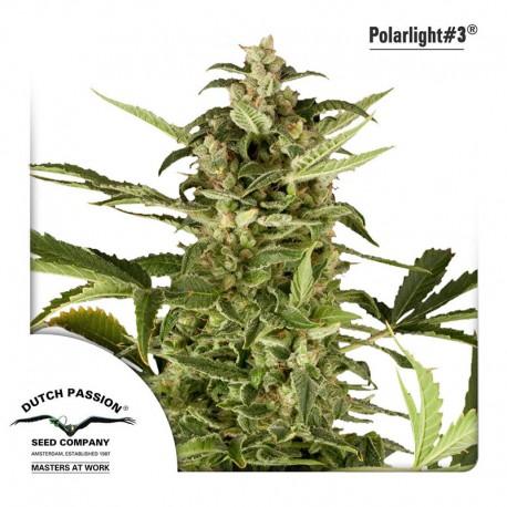 buy cannabis seeds Polar Light #3 Auto