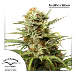 White Widow Auto