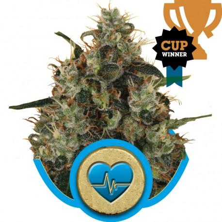 buy cannabis seeds Medical Mass