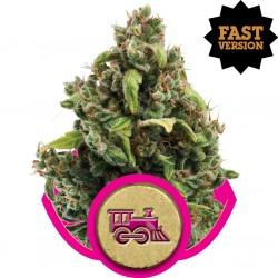 Candy Kush Express Fast V