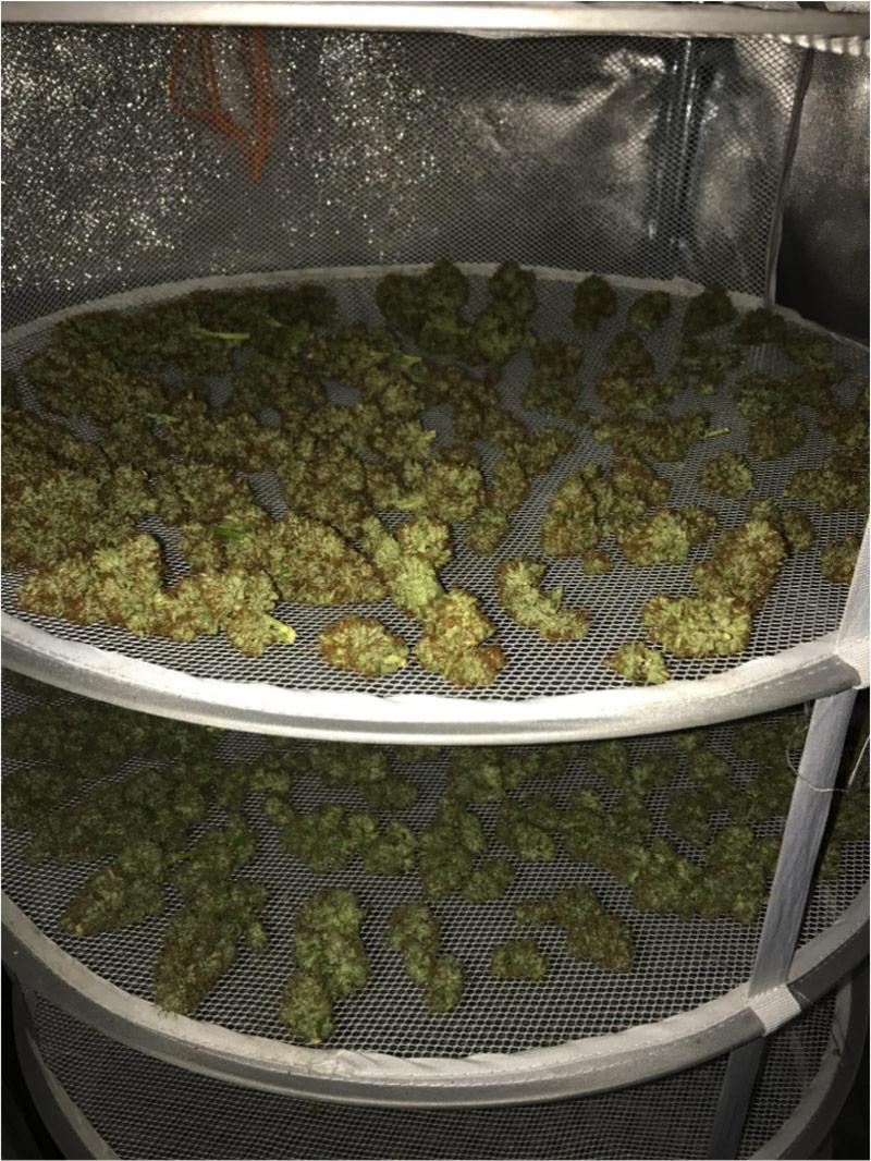 IMG2 graines de cannabis - part7