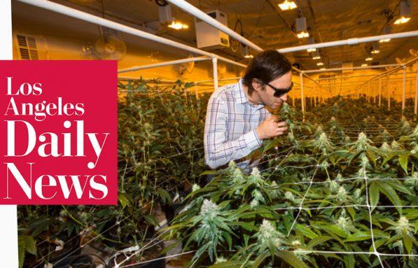 Los Angeles: de nouvelles mesures au sein de l'industrie du cannabis