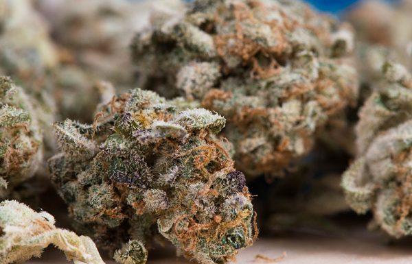 Jeff Sessions veut supprimer les protections fédérales liées au cannabis légal.
