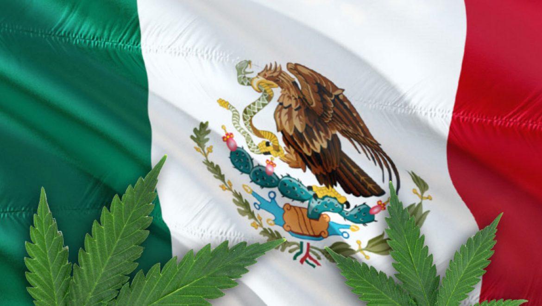 Le Mexique légalisera les produits à base de cannabis l'année prochaine.