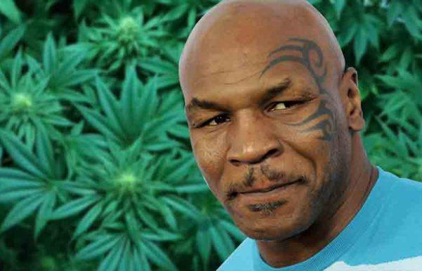 Mike Tyson va créer un resort du cannabis en Californie