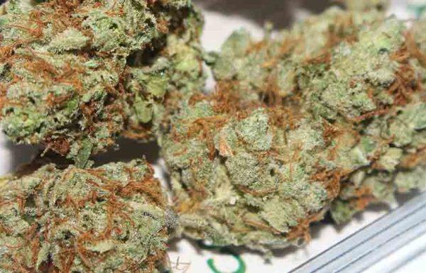 Rapport: Au Canada, la consommation de cannabis devrait augmenter d'ici 2019