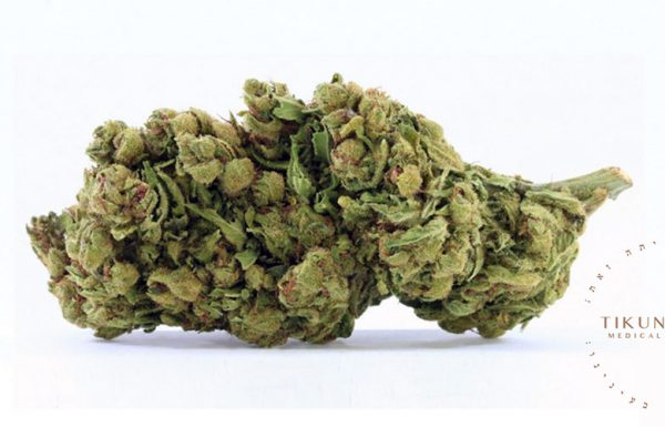 Étude: 96% des patients atteints de cancer sont soulagés par le cannabis médical