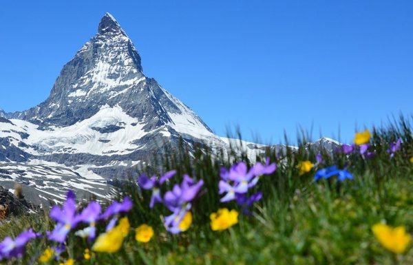 Suisse: le marché du cannabis contenant 1% de THC gagne en popularité