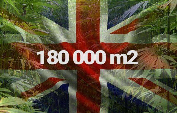 Une plantation de 18 hectares de weed en Angleterre