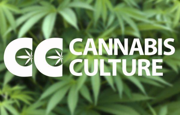 "Canada: Jody Emery forcée de quitter ""Cannabis Culture"""