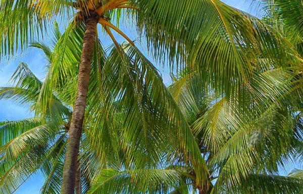 Hawaï : les dispensaires de cannabis n'accepteront plus de paiement en cash.