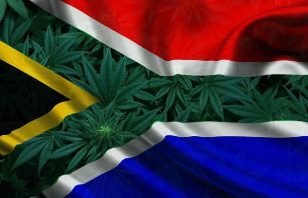 Zuid-Afrika heeft een ontwerp voor de regulering van een programma voor medicinale cannabis