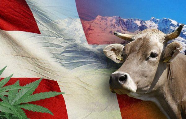 La Suisse s'intéresse à la légalisation du cannabis