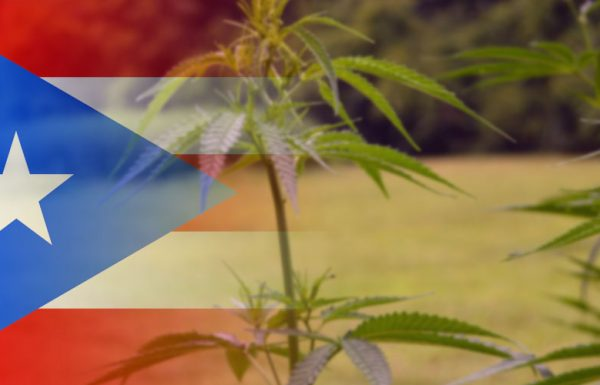 Puerto Rico : le cannabis médical comme remède anti-crise économique