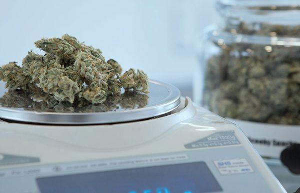 Uruguay: 11 500 acheteurs de cannabis enregistrés