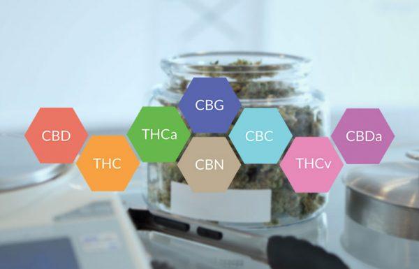 Étude: cannabinoïdes et chimiothérapie tuent des cellules leucémiques