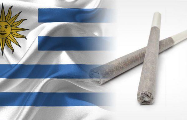 Uruguay: nouvelle mesure concernant la consommation récréative du cannabis chez les adultes
