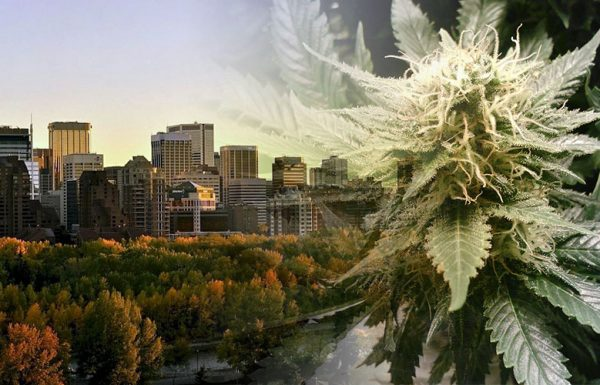 Canada: Check the first draft of the cannabis legislation in Alberta.