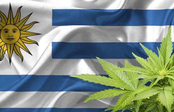 Retard de la légalisation en Uruguay, le trafic reste lucratif