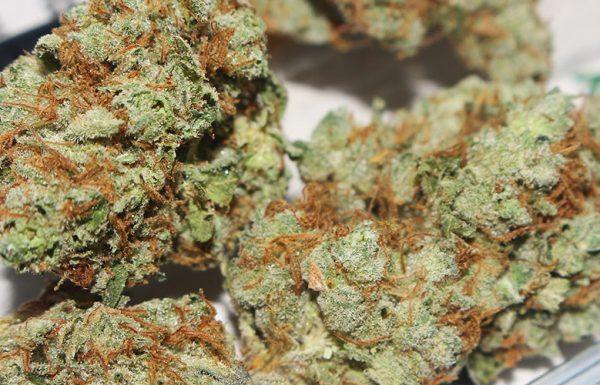 Willkommen zum letzten Teil des vergleichenden Tests der White Widow Cannabis Samen von seedmarket