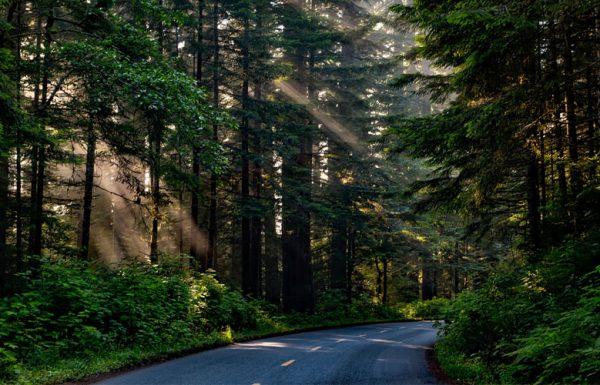 Californie: le gouverneur alloue un budget de 1,5 million de dollars pour nettoyer les forêts des espaces de culture illégaux.