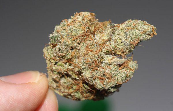 45% des Américains ont essayé la marijuana