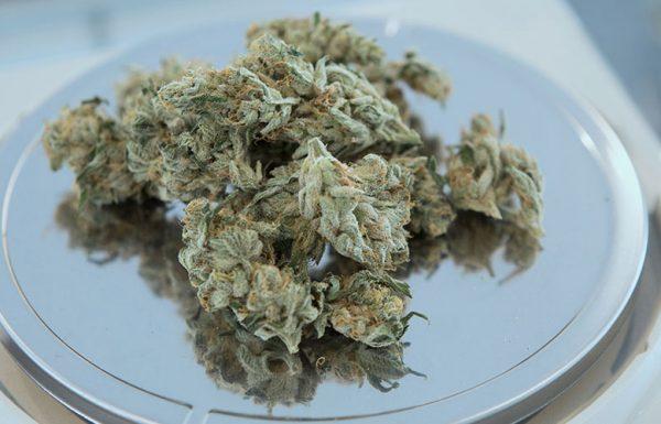 Uruguay: Bank will Apothekenkonten für Cannabis-Verkäufe schließen
