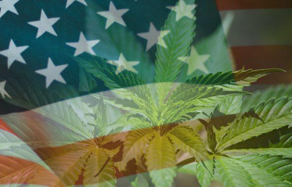 Légalisation du cannabis aux Etats-Unis : jusqu'ici, tout va bien