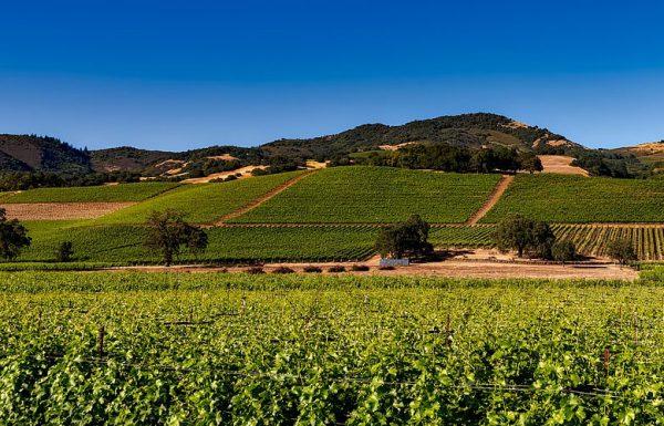 L'industrie du vin s'adosse à celle du cannabis en Californie